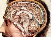 Η νόσο του Alzheimer εξαπλώνεται στον εγκέφαλο σαν λοίμωξη