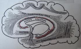 Οδοντωτός πυρήνας και η έλικα του προσαγωγίου