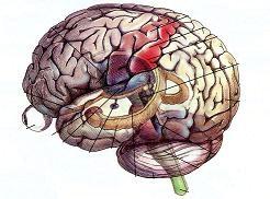 Η γαλακτική οξέωση και η διαταραχή των εγκεφαλικών αγγείων
