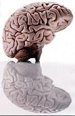 Επικίνδυνα εγκεφαλικά αποστήματα από μικρόβια