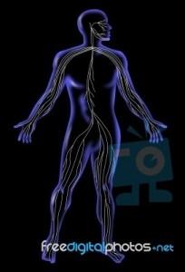 Το αυτόνομο νευρικό σύστημα και η σύγχρονη νευρολογία