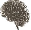 Πρωτεΐνες, λίπη και εγκεφαλικά